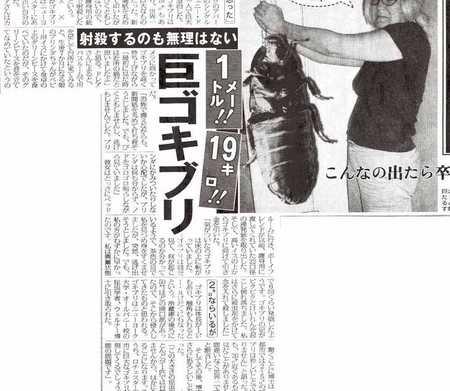 gokiburishasatushoukoshashinn.jpg